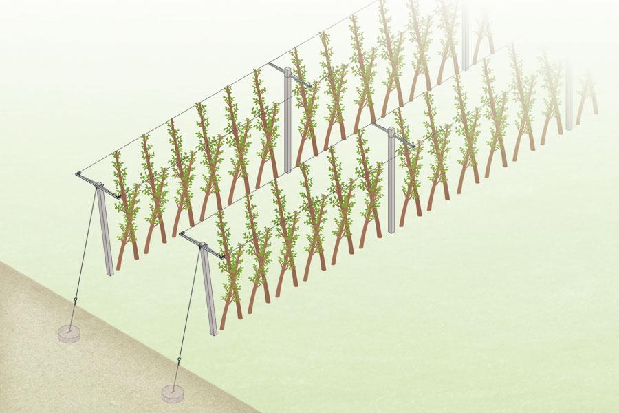 Forma a v sistema d 39 impianto per frutteti comavit pali for Casa a forma di v